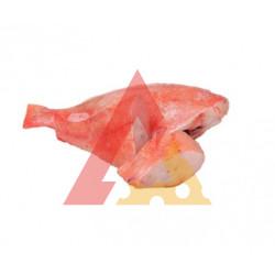 Red Fish M Aparado E/I